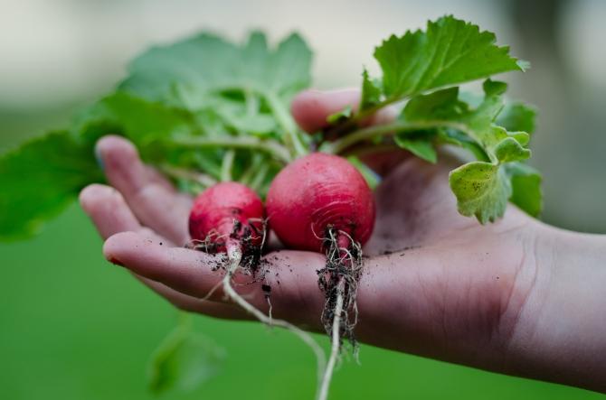 healthy-vegetables-restaurant-nature